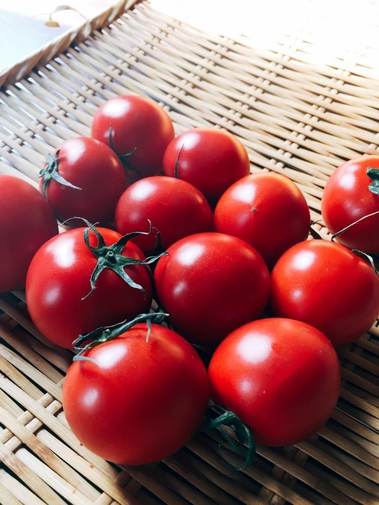 アスリートトマト