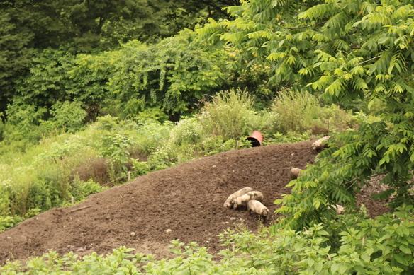 顔のしっかり見える生産者から届く安心安全な食材。 藤原ふぁーむ『安曇野放牧豚』