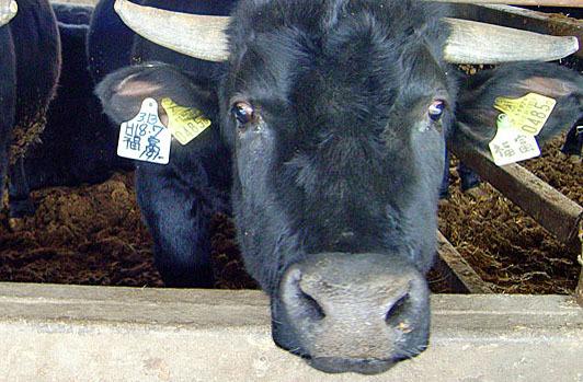 顔のしっかり見える生産者から届く安心安全な食材。 讃岐まんのう 鎌田牧場 鎌田牛