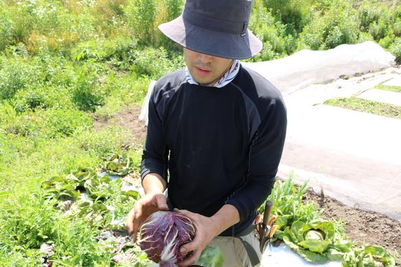 顔のしっかり見える生産者から届く安心安全な食材。 無農薬で化学肥料を用いずに栽培の美味い野菜