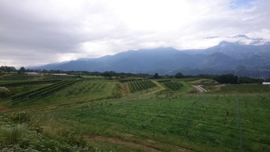 日本ワイン(¥5500〜)