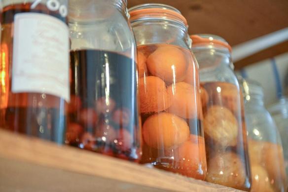 季節の果実酒 各種