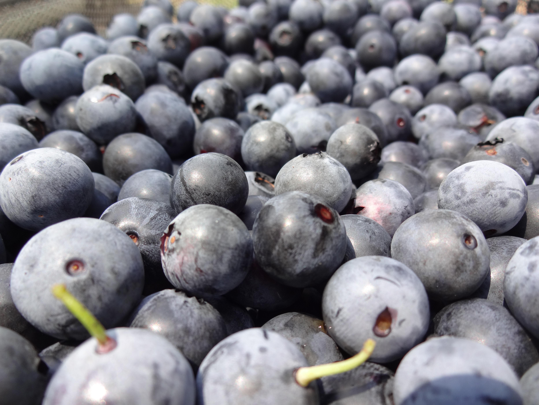 自家栽培無農薬ブルーベリードリンク