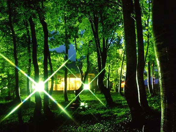 ライトアップされたブナの森☆