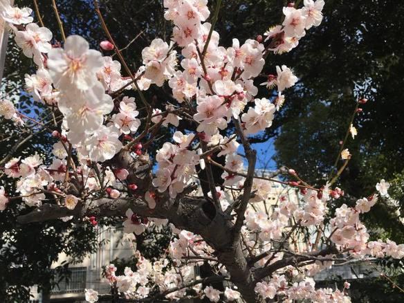 生田神社は春でしたw