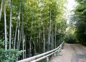 店の裏山は、自然がいっぱいの遊歩道があります。