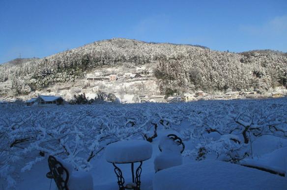 1/23 雪の景色です。梅の枝にも雪が積もっていて、一面真っ白で墨絵のようでした。