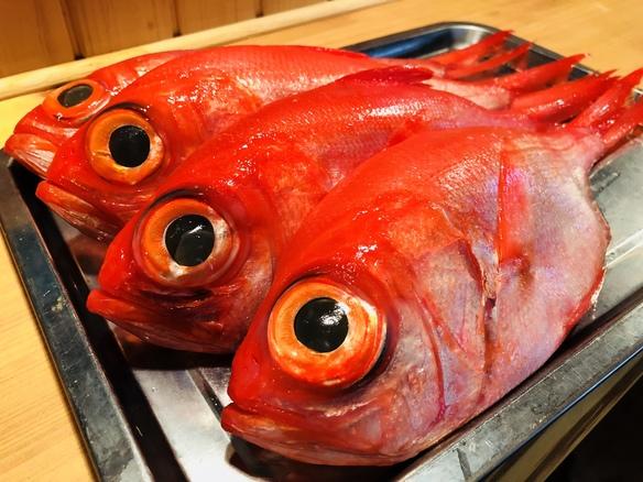 新鮮な地魚や、珍しい海産物が毎日日替わりで入荷!!