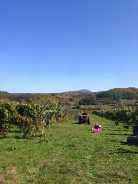 北海道 余市のワイナリー、ドメーヌ タカヒコ。2013に初訪問し、2014年にナナツモリ畑の収穫をお手伝い。