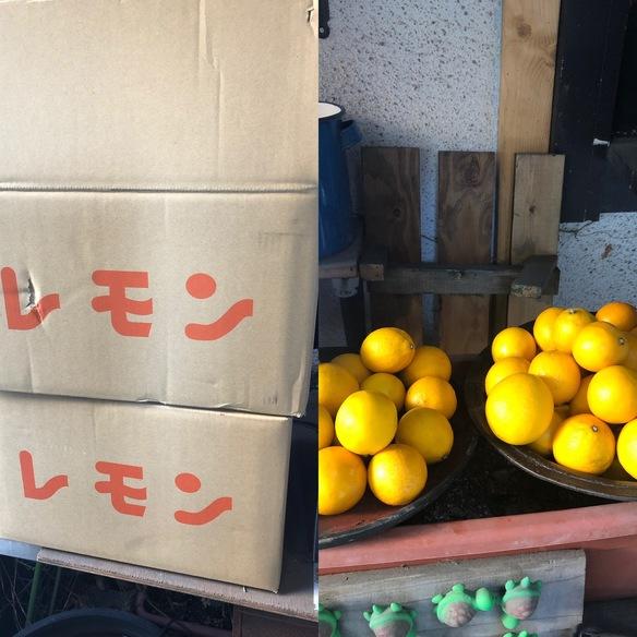 熊本中田果樹園のみかんを掛け合わせて作った甘みのあるグラントレモン‼️