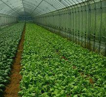 """ルコラステーション >この会社ってどんな会社? 有限会社ルコラステーション代表取締役の畝田謙太郎氏は、自ら生産者と共に汗を流し、最高の野菜作りを探求する「ベジター(野菜人)」。 20年前、日本ではまだ無名だった""""ルコラ""""を自らの足で都内のレストランに紹介しメジャーな野菜に育て上げた第一人者であり、全国の優れた野菜生産者を一流の料理店につなぐ「野菜の目利き」です。 数多くの有名料理店から「畝田氏が選ぶ野菜」にオーダーが殺到しています。"""