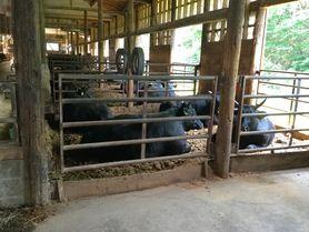 岩手県小形牧場の前沢牛