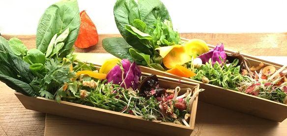 野菜盛食べ放題 出汁で食べる 薬膳しゃぶしゃぶ (お野菜盛お替り放題)鶏しゃぶコース2800 豚しゃぶコース3400