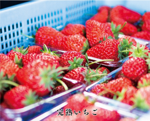 【期間限定】完熟いちごといちごサンドが食べ放題!『恵比寿楽園テーブル』